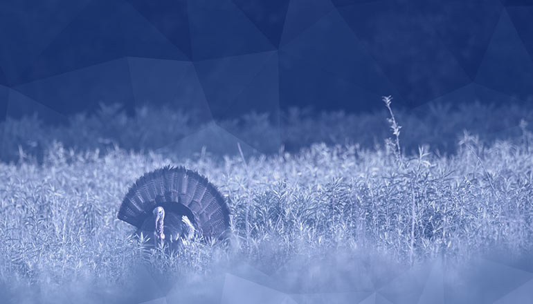 This Thanksgiving, Be Thankful for Network Security | Niagara Networks